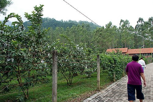 Tempat Wisata di Batu ( Kusuma Agrowisata )